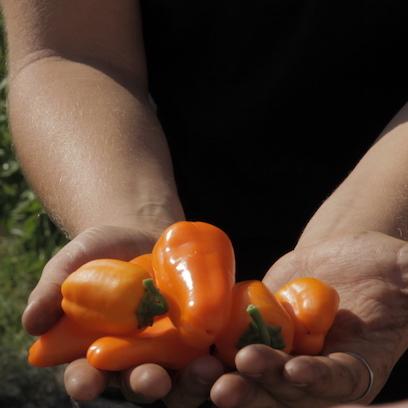 Pepper hands SQ